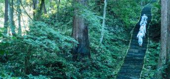 Yamabushi train on the stone stairway of Mt. Haguro of the Dewa Sanzan