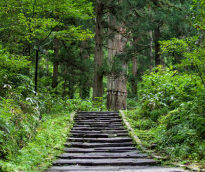 The Path to the Five Storied Pagoda on Mt. Haguro of the Dewa Sanzan