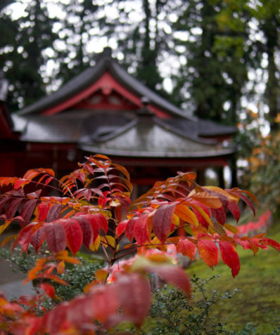 Reisaiden Shrine at the top of Mt. Haguro where the Dewa Sanzan Festival of Flowers takes place