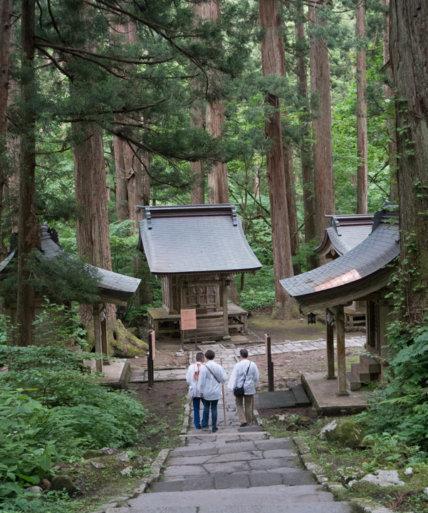 Cedar Forest of Mt. Haguro of the Dewa Sanzan