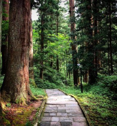 The Stone Stairway up Mt. Haguro of the Dewa Sanzan