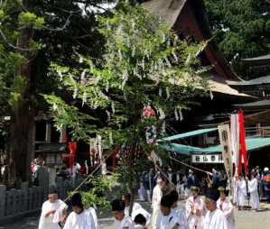 Special Tree worshipped during the Dewa Sanzan Flower Festival on Mt. Haguro